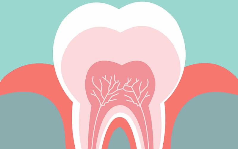 diş nedir